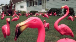 ** ADVANCE FOR MONDAY, OCT. 30 ** FILE ** Dozens of pink flamingos stand in a yard in Brook Park, Ohio, in this July 16, 1998, file photo, that was set up by The Original Flamingo Suprise, a party service, to celebrate the resident's 49th birthday.  The original version of the plastic flamingo may be singing its swan song after being alternately celebrated as a tribute to one of nature's most graceful creatures and derided as the epitome of American kitsch. Union Products Inc. stopped producing flamingos and other lawn ornaments in June, and is going out of business Nov. 1. (AP Photos/Amy Sancetta, file) ORG XMIT: NYBZ210