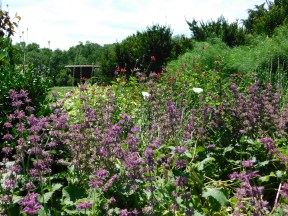 June Circle Garden