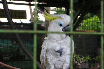 "cockatoo that says ""pangit!"""