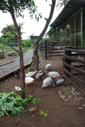 hotel-kimberly-fowl
