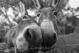 Sweet Donkey Friends