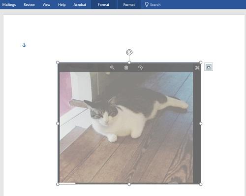 lighten-up-cat.jpg