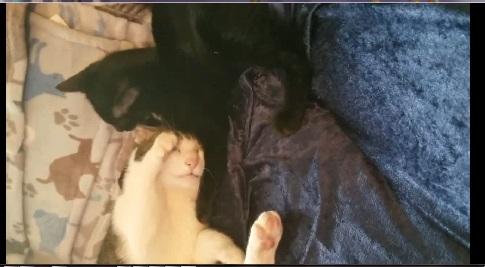 rotated-cat-videos.jpg