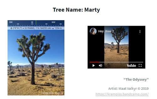 joshua-tree-name.jpg