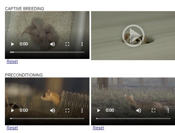 ferret-video
