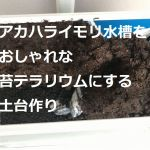 アカハライモリ水槽をおしゃれな苔テラリウムにする土台作り