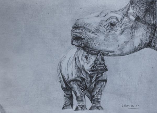 Graphitte drawing. Rhinos. Cynthia Bandurek