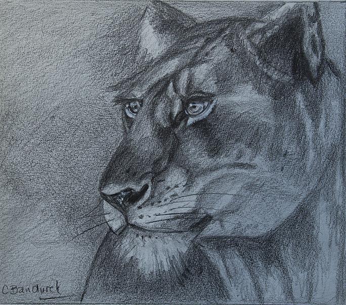 Lion graphite - Cynthia Bandurek