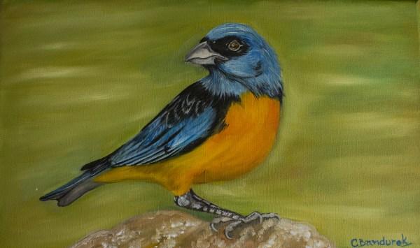Naranjero . Bird. Oil Painting. Cynthia Bandurek