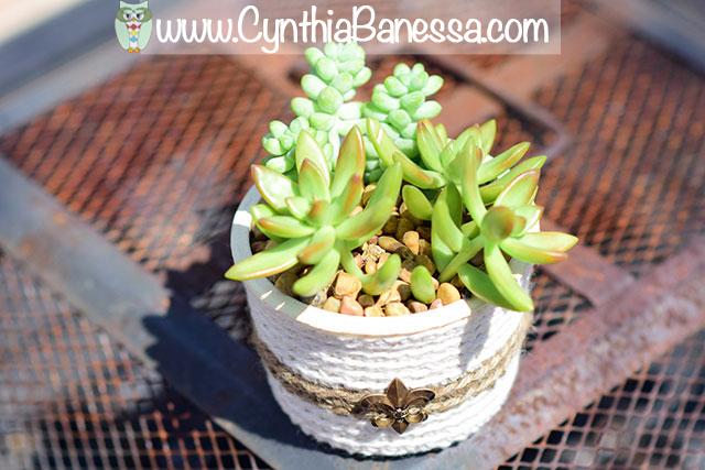 succulents8