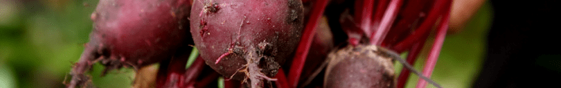 Click here to view a variety of beets you can add to your spring garden.