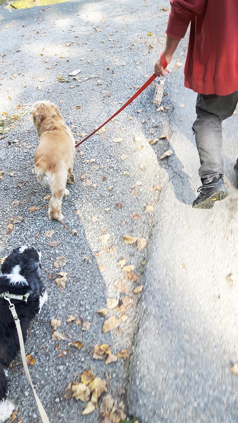 walking-charlie-small