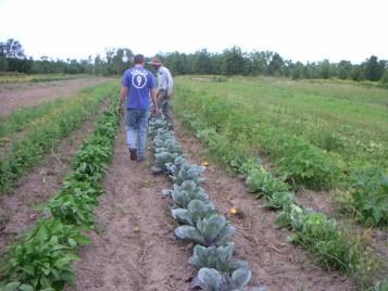 Mark's Farm