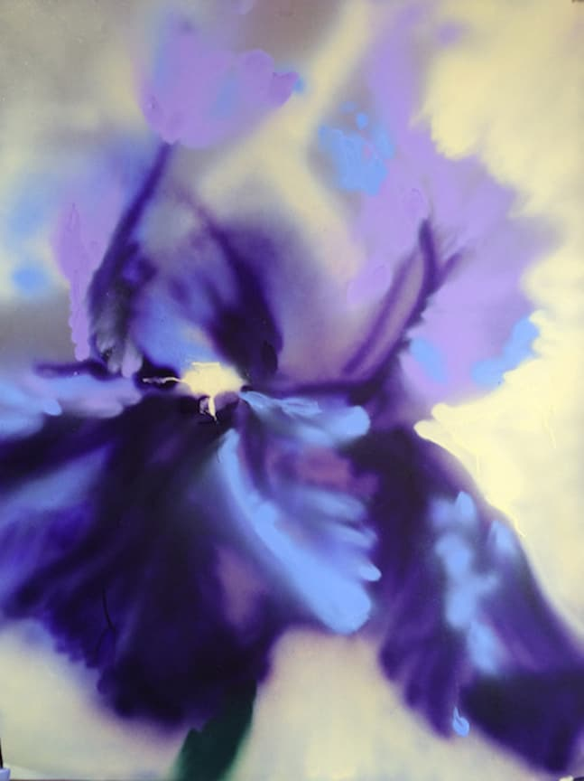 Giant purple Iris with yellow background, spray painted by artist Cynthia McLoughlin