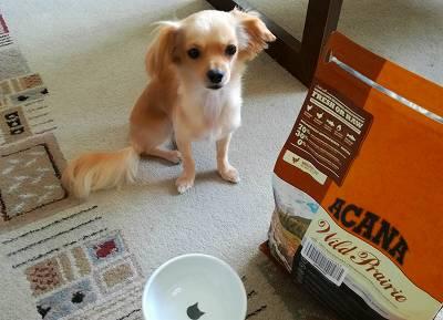 フードのパッケージとお皿を前にお座りする犬