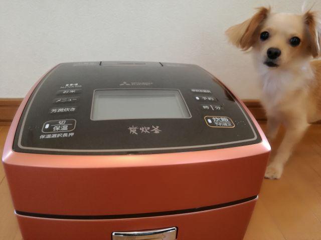 新しい炊飯器と犬の記念撮影