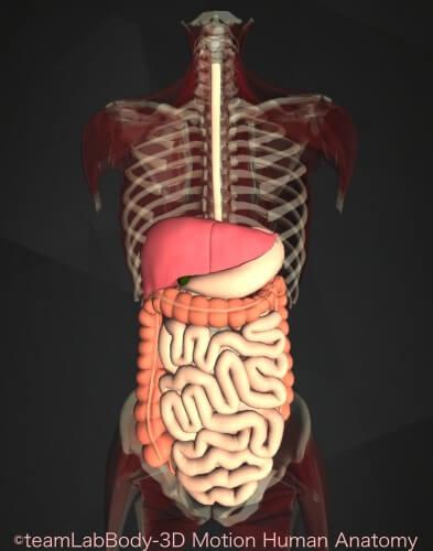 ニキビ 腸内環境 消化器