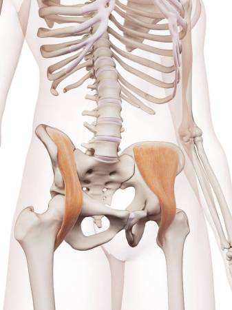ウォーキング 筋肉痛 腸骨筋