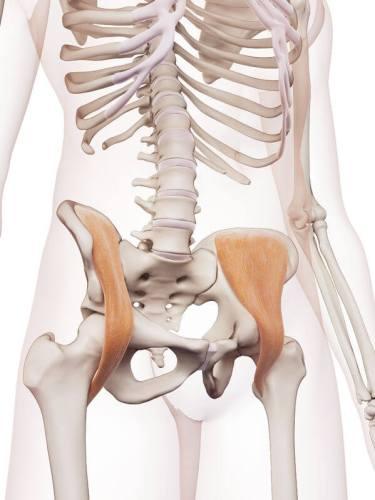 腸トレ 腸骨筋