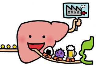 肝臓の場所を図で解説。驚くべき肝臓の機能と働き!