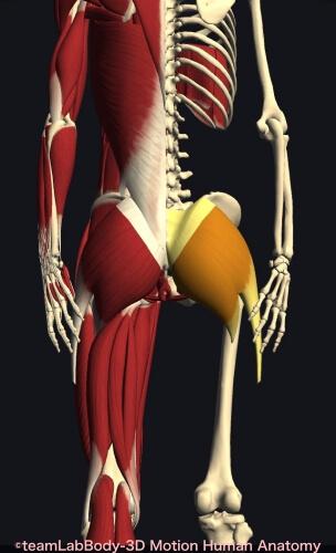 ウォーキング 筋肉痛 大臀筋
