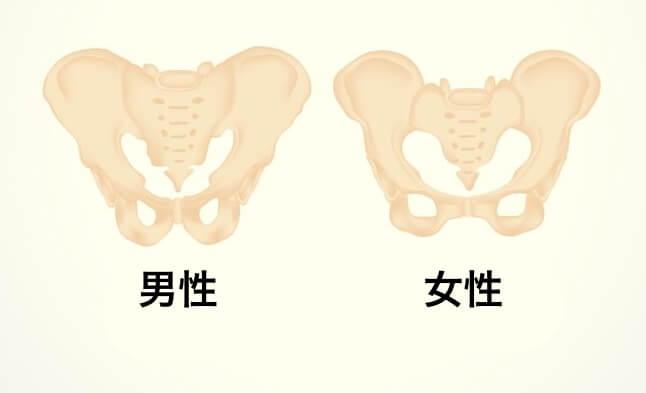 恥骨の痛み 位置 図 骨盤 男性 女性 違い