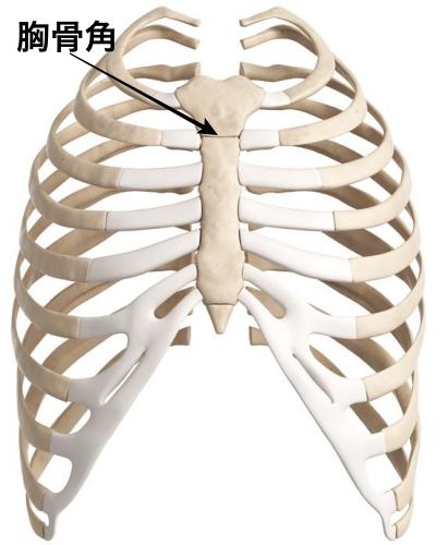剣状突起 位置 図 胸骨角