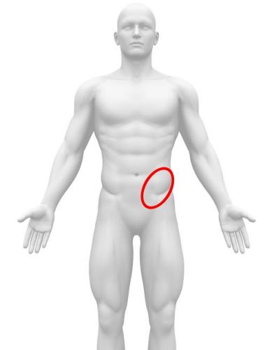S状結腸場所 図