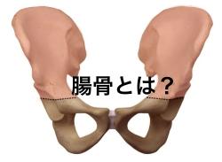 腸骨の場所と特徴とは?解剖図でわかりやすく解説!