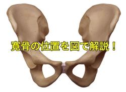 寛骨の位置 図