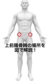上前腸骨棘の位置を図で解説!腰骨と呼ばれる骨盤のでっぱりについて