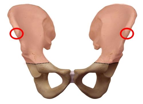 腰骨 上前腸骨棘