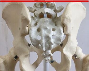ヤコビー線の位置を図で解説!腰椎の高さがわかります。