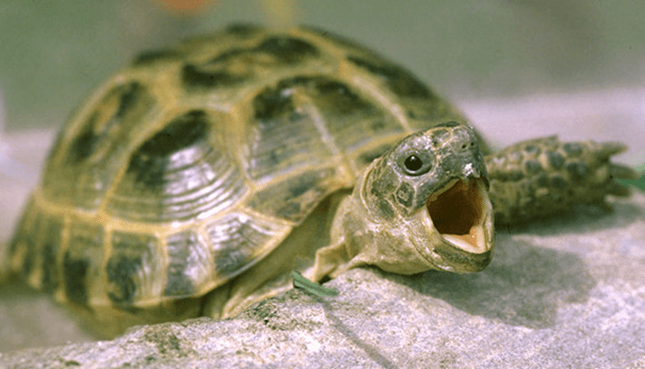 Yes, This Happened In The World: TURTLEGASM
