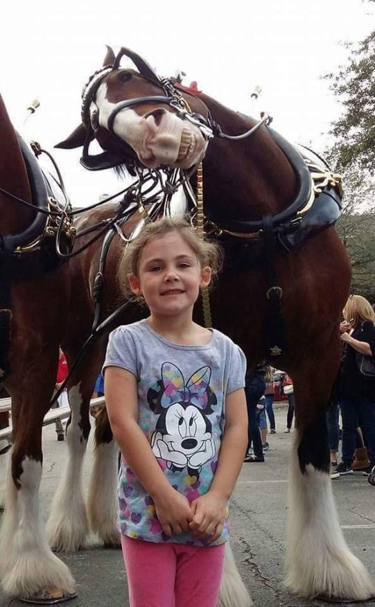 roFdSohRRSlNrdz1otrO_horse photobomb
