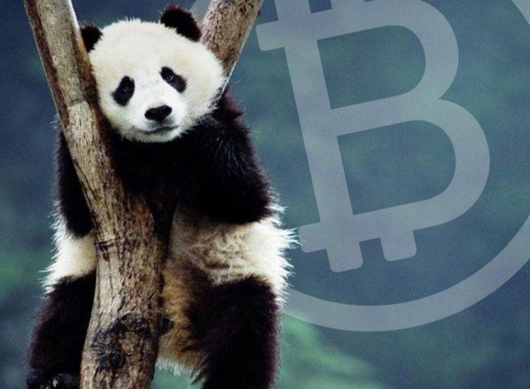 Startup Panda Group ofrece puntos de ventas de criptomonedas en Venezuela y Colombia