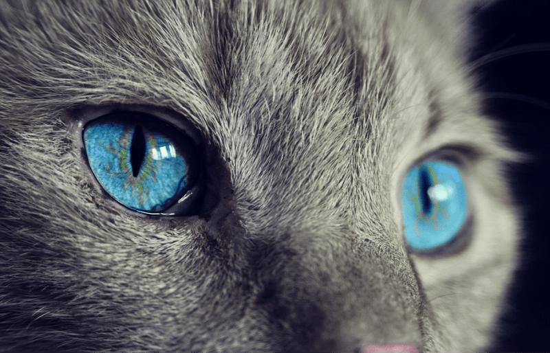Uważajcie na swoje koty!