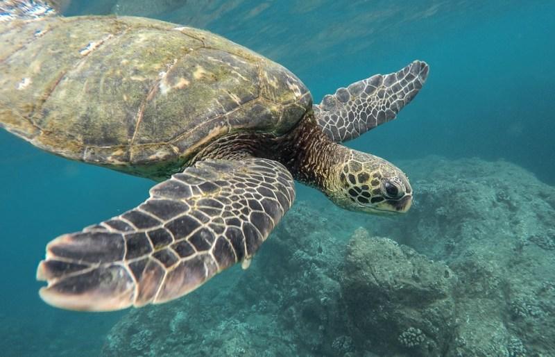 Żółwie pływają wśród śmieci (film)