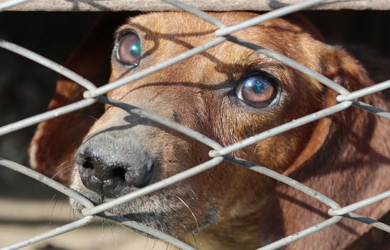 Reagujmy na męczenie zwierząt!