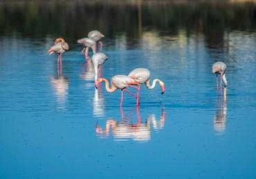 Zobacz Larnakę - bezpłatne wycieczki z przewodnikiem