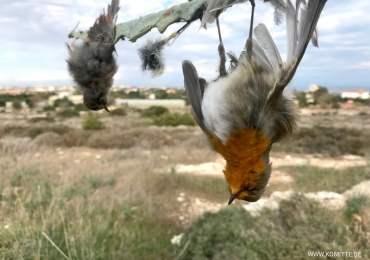 Setki ptaków ocalone