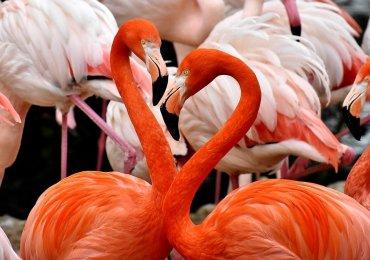 Policzyli flamingi