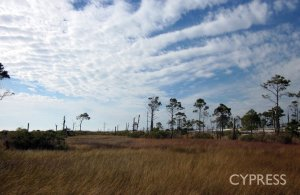ecosystem restoration in coastal areas