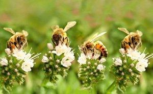 Η μέλισσα προβάλλει μια ομάδα δραστηριοτήτων παρά την πανδημία