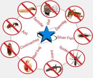 Apentomotiki Pest Control