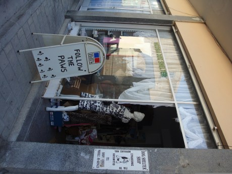 Nicosia Dog Shelter - Nicosia Charity Shop