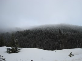 8 Feb 2012 - Troodos mountains, Cyprus (25)
