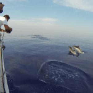 Ένα καθαρόαιμο αγωνιστικό σκάφος