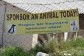 Sponsor an animal Today