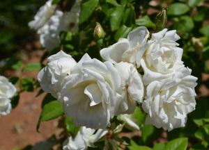 2. Flowers